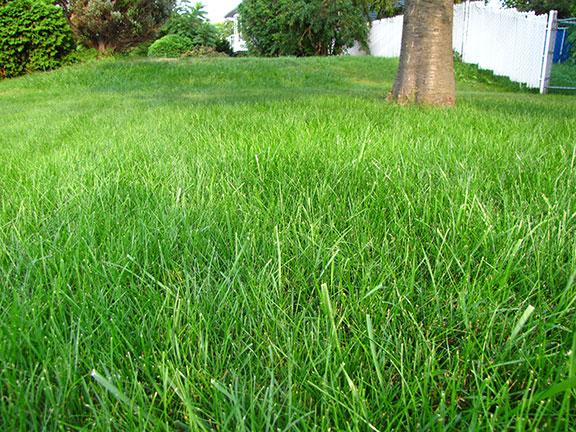 Services m a pelouse marc archambault entretien et for Service entretien pelouse