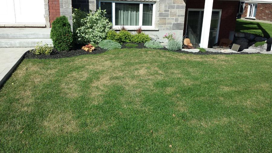 Traitement de la pyrale et de la punaise m a pelouse marc archambault entretien et - Desherbant selectif gazon efficace ...