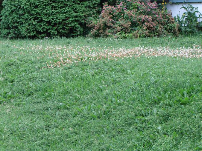 Herbicide Sélectif MA Pelouse