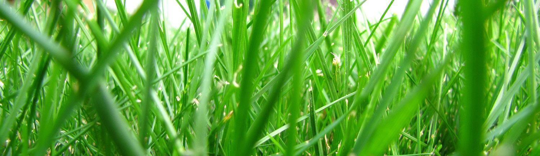 entretien-pelouse-mapelouse