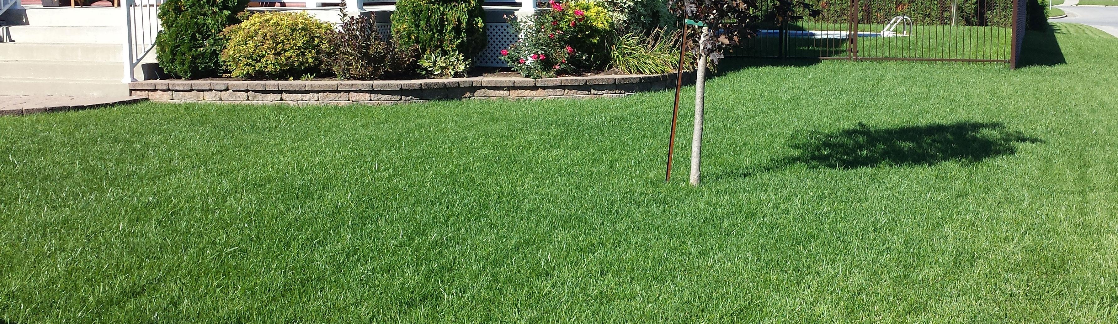 entretien-pelouse-mapelouse3c